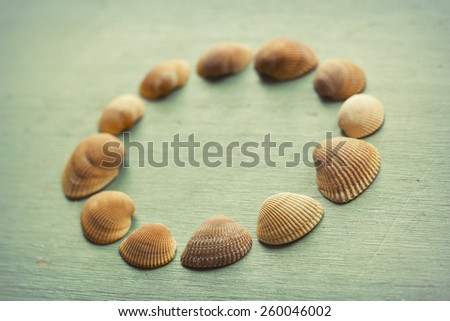Several unique seashells on a grungy wood background - stock photo