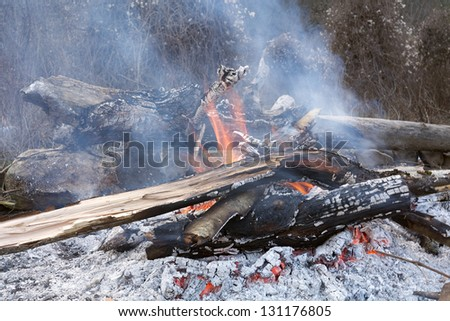 Severely burning fire in the woods of the old branches and logs