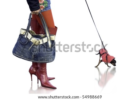 Sexy girl with cute Chihuahuas dog wearing red boots and stylish hand bag. With plain background. - stock photo