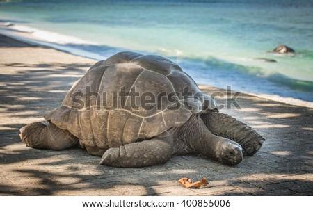 Seychelles giant turtle - stock photo