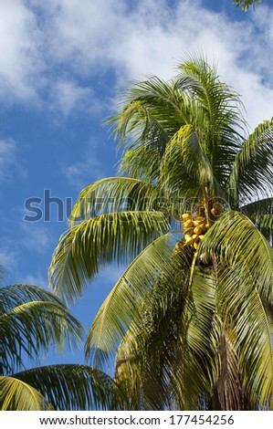 Seychelles, Island of La Digue. Historic L'Union Estate and coconut plantation. Red coconut palm trees.