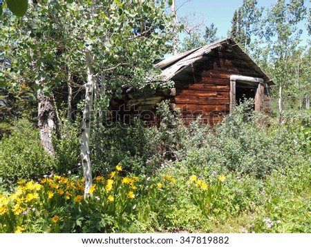 Shack surrounded by wildflowers on a deserted gold mine in the Wyoming mountains.