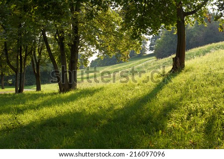 Shade and Low Light with Field and Trees - stock photo