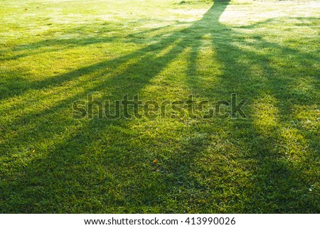 shade of a tree branches on turf grass  in park - stock photo