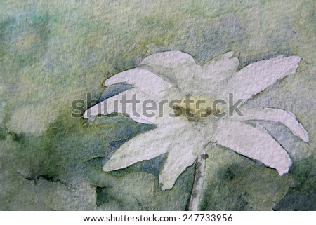 Shades of Green Flannel Flower - stock photo