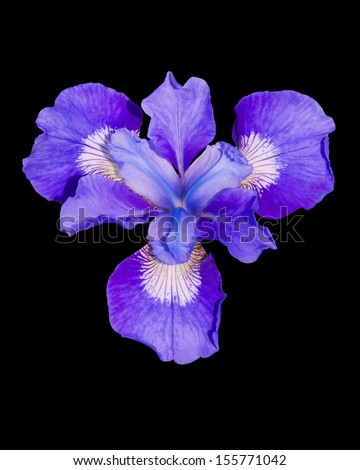Shadow Eyed Iris - This photograph can be used to create various sizes of matted prints and all occasion handcrafted floral note cards to provide images to enhance your thoughts...