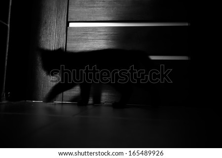 Shadow kitty indoor - stock photo
