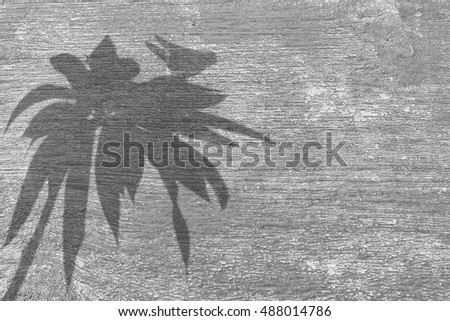 shadow little bird over tree on old gray old wooden background.