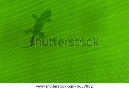 shadow of a gecko on banana tree leaf