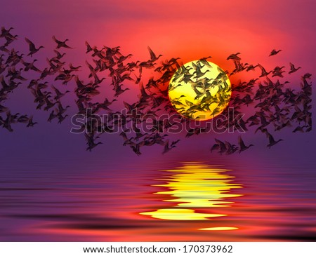 Shadow of an bird migrating ducks  silhouette flying to the sun by red sunset over the ocean - stock photo