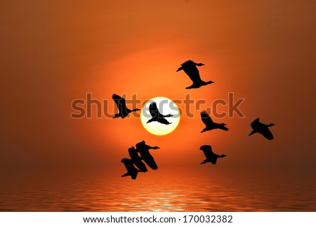 Shadow of an bird silhouette flying to the sun by red sunset over the ocean