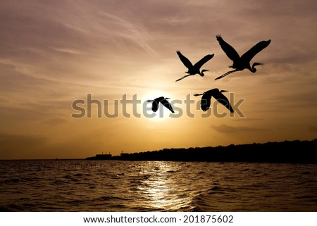 Shadow of an Birds flying on sunset over the ocean - stock photo