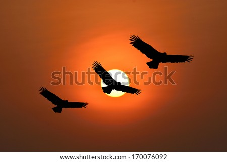 Shadow of an eagle flying to the sun by red sunset over the ocean  - stock photo
