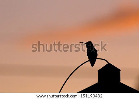 Shadow silhouette of hummingbird guarding the feeder at sunset