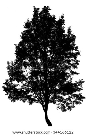 shadow  tree on a white background