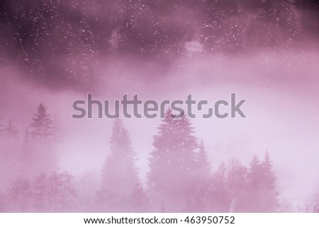 shadows of the forest in a misty winter morning