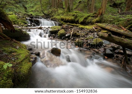 Shady Forest Stream
