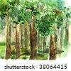shady grove watercolor - stock photo