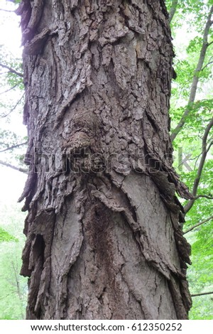 Hickory Tree Stock Images, Royalty-Free Images & Vectors ...
