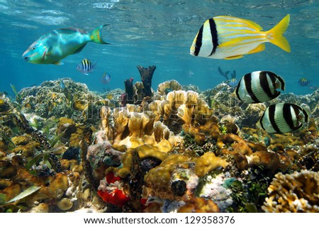 Shallow coral reef under the sea with colorful tropical fishes - stock photo