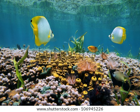 Shallow coral reef with tropical fish, sponges and marine worms underwater in the Caribbean sea
