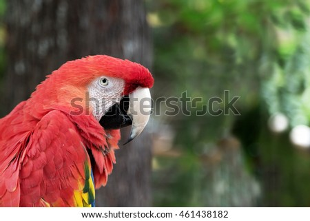 Shallow depth of field captures this gorgeous macaw in a natural blurred out background of forest and trees. Horizontal with copy space. Delightful for a variety of ideas and concepts.