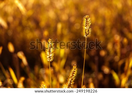 Shallow depth-of-field photo of meadow flowers - stock photo