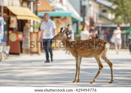 Shallow depth of field with deer in the streets of Miyajima Island in Japan - stock photo