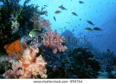 Shallow Reef off of Felidu Atoll in the Maldive Islands