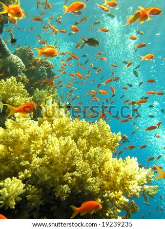 Shallow water coral reef - stock photo