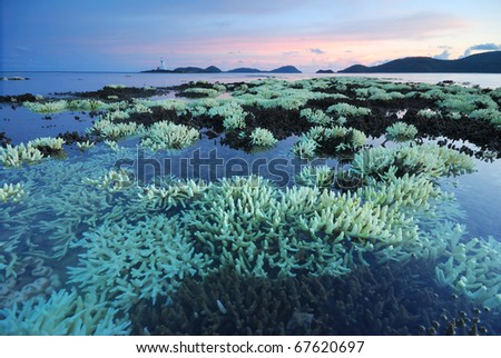 Shallow water corals, Global warming,on the Beach - stock photo