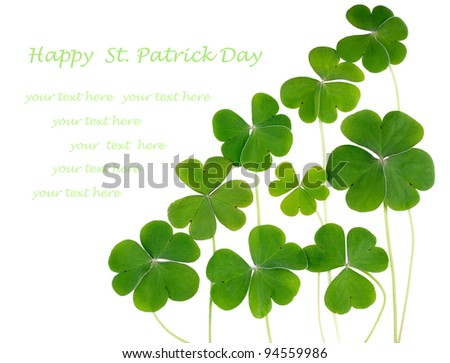 Shamrocks, three leafed clovers isolated on white. Copy space for your text - stock photo