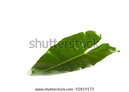 Shaped like a heart-shaped leaves isolated on white background