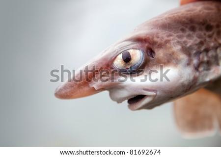 shark close up - stock photo