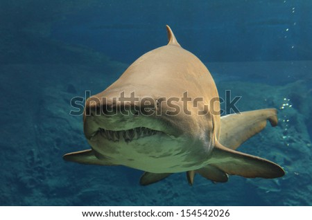 Shark floating in water - stock photo