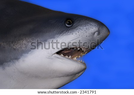 Shark head - stock photo