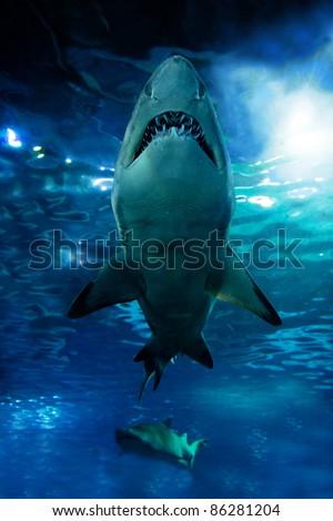 Shark silhouette underwater. Danger concept - stock photo