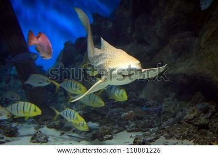 shark swimming along underwater - stock photo
