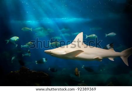 Shark Under Water - stock photo
