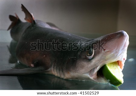 shark with lime - stock photo