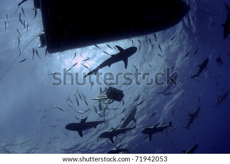 Sharks circling the boat