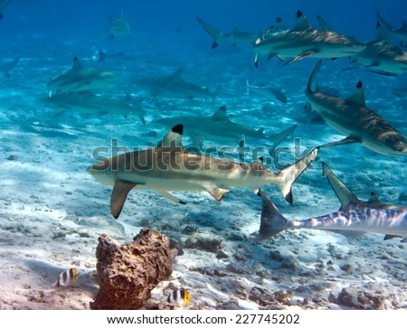 Sharks over a coral reef at ocean  - stock photo