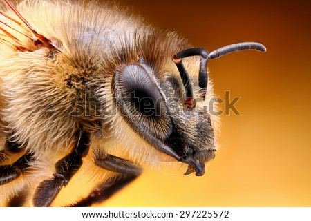 Sharp and detailed study of Bee taken with macro lens stacked from many shots into one sharp photo. - stock photo