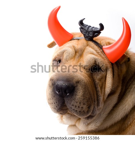 sharpei dog dressed up as a devil - stock photo