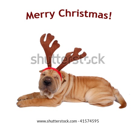 sharpei dog weaing antler  -with merry christmas text - stock photo