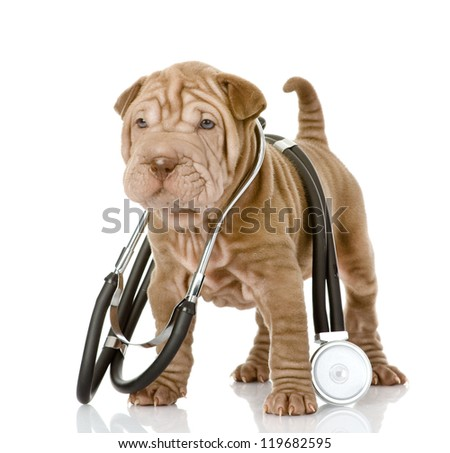 sharpei puppy dog with a stethoscope on his neck. isolated on white background