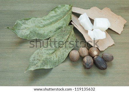 shea butter,shea butter nuts on wooden - stock photo
