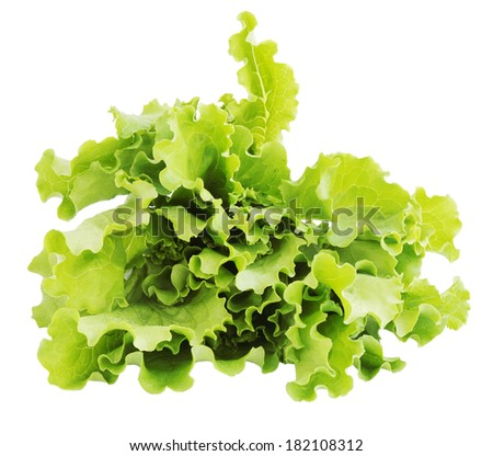 Sheaf of lettuce isolated on a white background