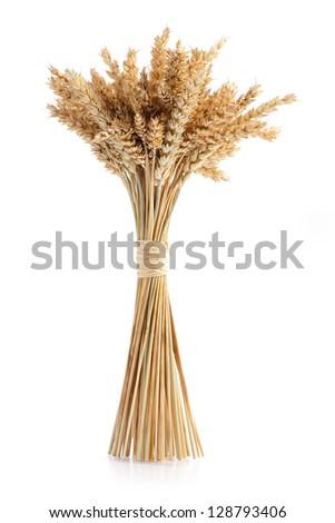 Sheaf of ripe wheat isolated on white background - stock photo