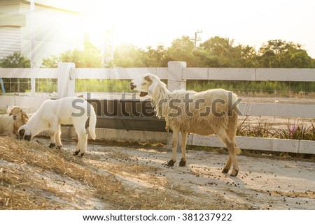 Sheep and goats on the farm - stock photo